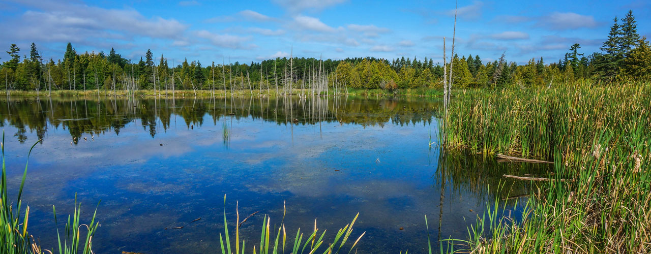 blue water, green grass and reed, blue sky with few clouds