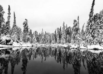 Lake and trees at IISD Experimental Lakes Area