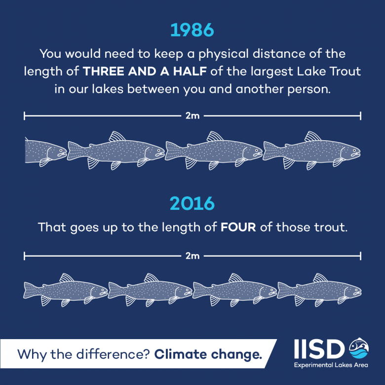 Infographic showing how the length of lake trout has gotten smaller over the last thirty years due to climate change