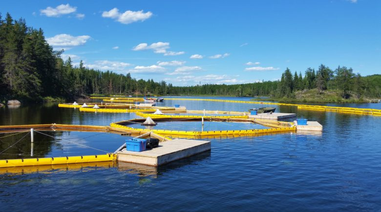 Yellow limnocorrals on a blue freshwater lake bordered by trees