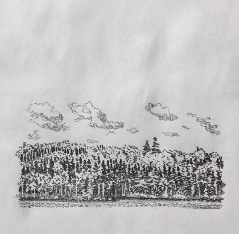 Todd Stewart sketch of boreal forest tree line