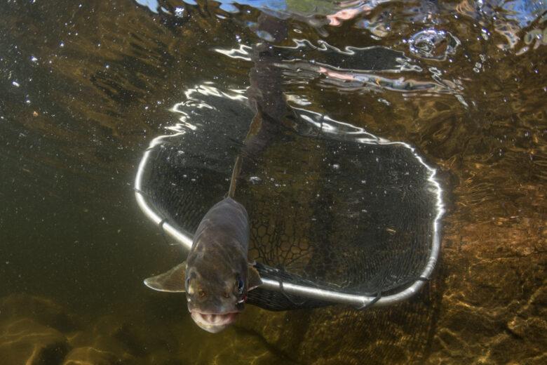 fish swimming away from net underwater