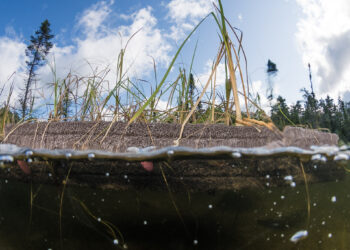 floating treatment wetlands from underwater