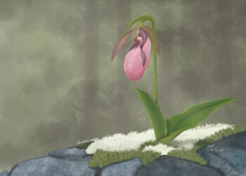 painting of a lady slipper flower