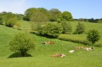Nature-based Infrastructure Agroforestry project in Belgium