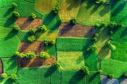 Agricultural Trade Negotiations and Sustainable Development