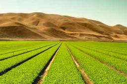 Agriculture, Water and Investment