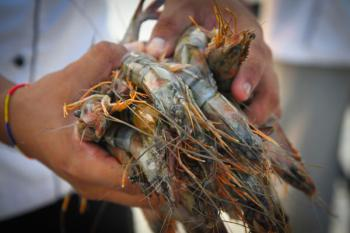 Deep Dive Into Fisheries Subsidies, Part 2: Cheap gas and free nets causing problems for shrimp