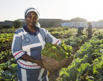 How IISD Is Contributing to Inclusive, Global Food Security