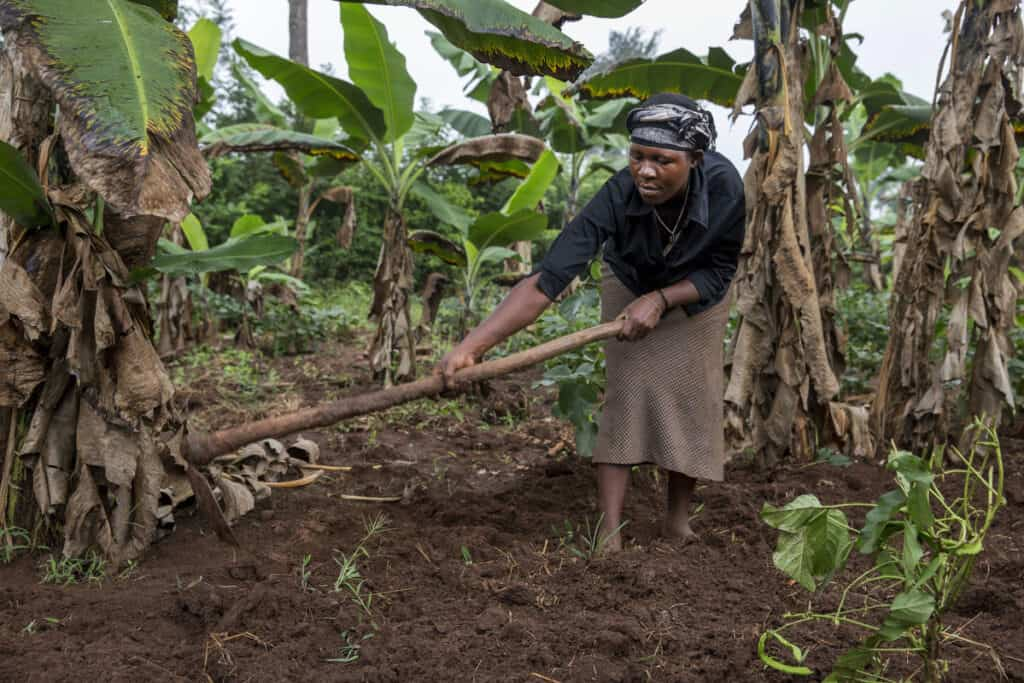 A farmer on a banana plantation in Uganda
