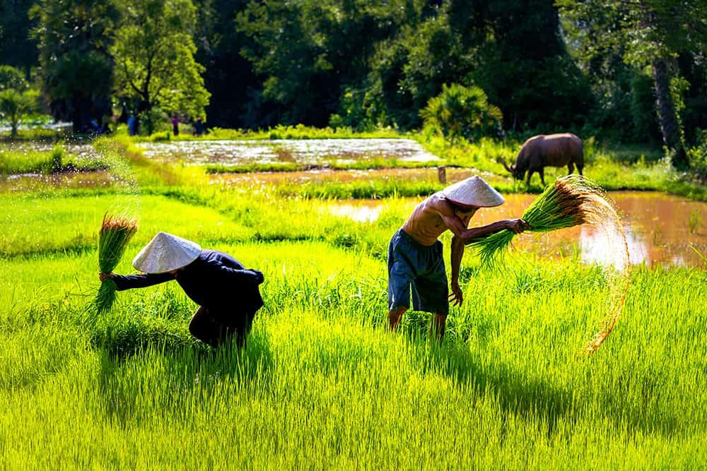 Farmers farming on meadow terraces.