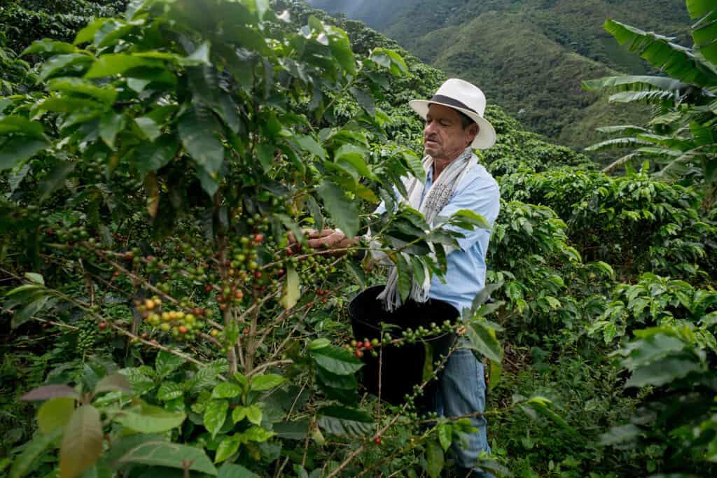 Coffee farmer in Colombia